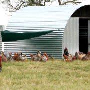 Free range farm stall