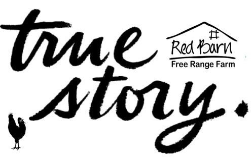 true story red barn farm