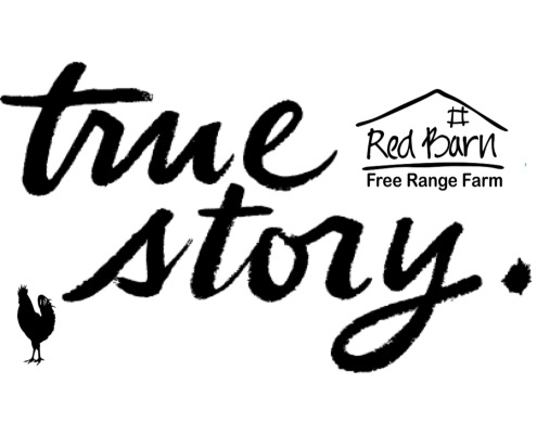 true story red barn farm