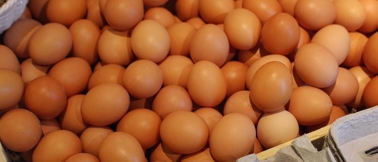 pullet eggs